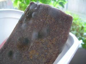 Moldykonjak